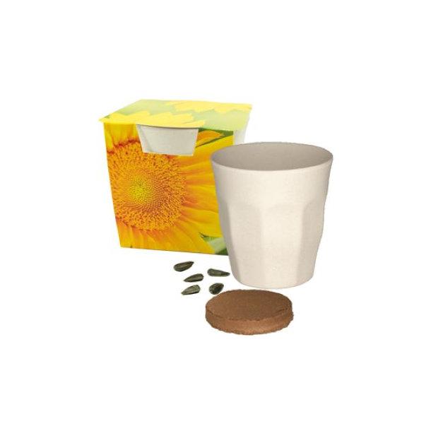 Growing Cup Sunshine