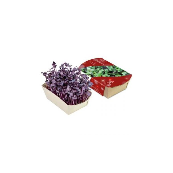 Microgreens-Gärtchen - Radies Sango