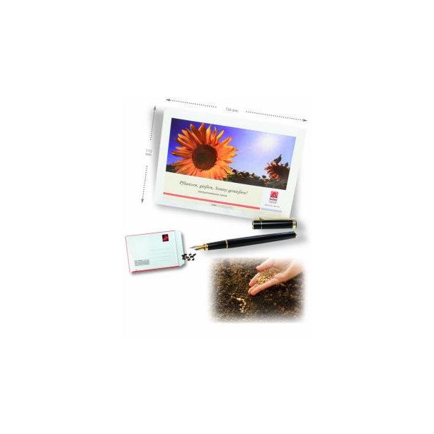Samentütchen individ. Gestaltung 115 x 156 mm
